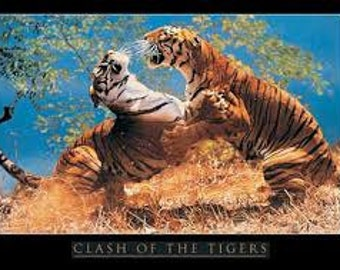 Clash of the Tigers Poster