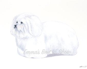 Coton De Tulear Dog - Archival Fine Art Print - AKC Best in Show Champion - Breed Standard - Non-Sporting Group - Original Art Print
