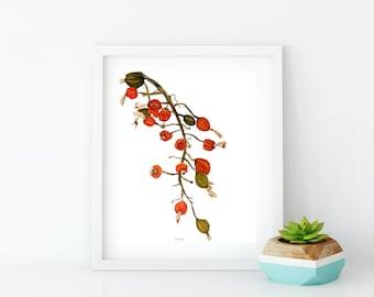Tropical Fall Seed Pods Fine Art Print from original artwork by artist Joy Neasley