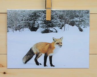 Lustrous greeting card blank 5 x 7: curious Fox