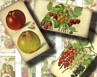Un FRUIT A jour (1) feuille de Collage numérique - Dominos 1 x 2 pouces ou bambou taille - Vintage Fruits et baies sur vieux papier - voir promo
