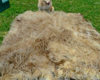 Lydia, Icelandic Ewe Fleece, Spring 2018, Raw, Unwashed, Natural, Cruelty Free, Possible Faux Sheep Skin 12.00 per pound