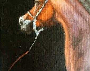 Original Nicolae Equine Art Nicole Smith artist Horse oil painting 5x7 bay arabian canvas