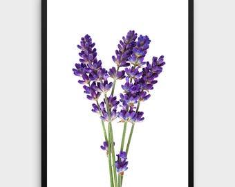 Lavender Art Print   Purple Printable Art, Botanical Watercolor, Lavender Wall Art, Rustic Home Decor, Antique Botanical Art, Kitchen Decor