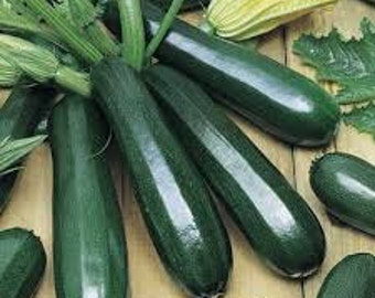 Zucchini Seeds Summer Squash 100 Black Beauty 60 days