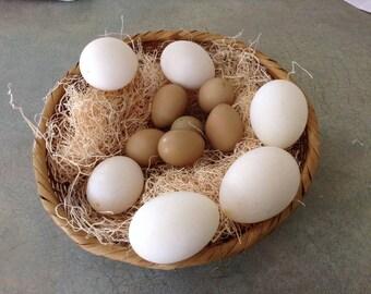 Duck & Pheasant Eggs Blown
