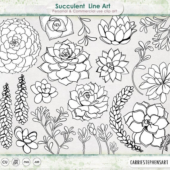 Line Art Digital : Succulent line art printable clipart outline
