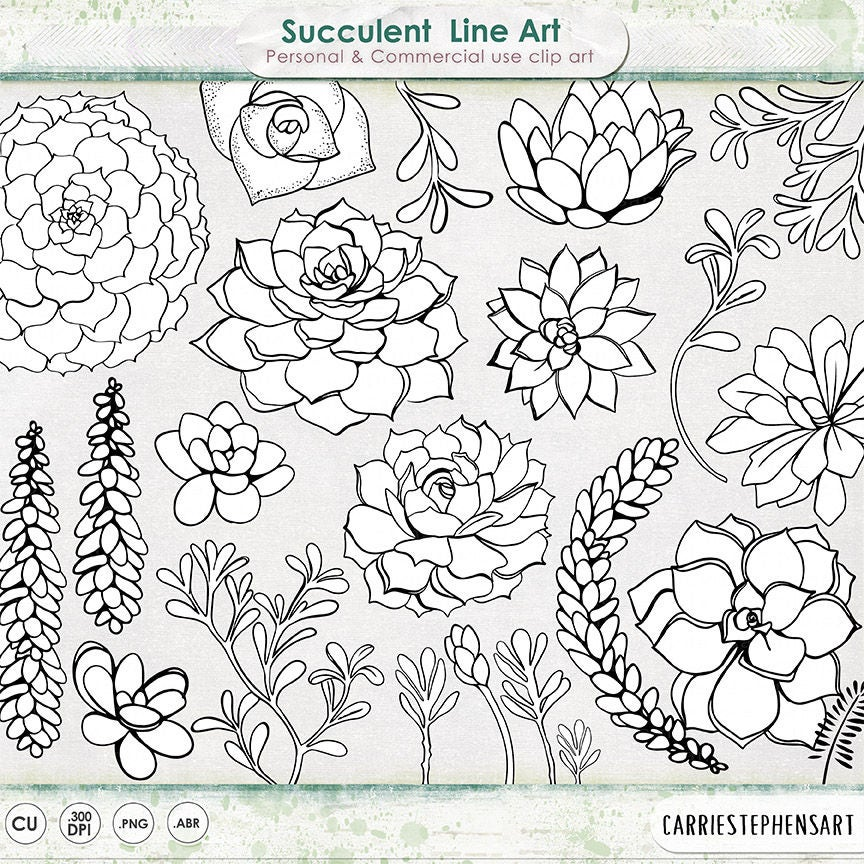 Line Art Etsy : Succulent line art printable clipart outline