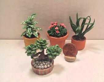 Mini House Plant