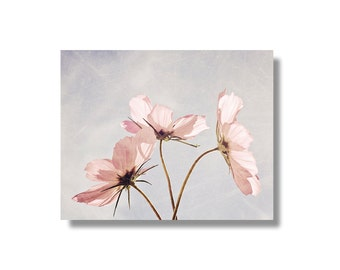 Pink cosmos flower canvas wall art, pale blue, pale pink, flower art, floral canvas gallery wrap, garden flower photography - Blush