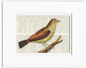 bird V dictionary page print