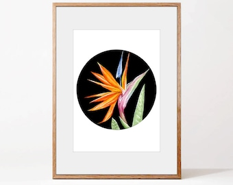 Bird of paradise flower digital art | art print | gouache | watercolor | wall decor | wall art | A4