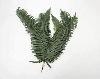 25 pc Large Pressed Preserved Natural Dried Fern Leaves Forest Green Wedding Cottage Rustic Decor Botanical Wholesale Crafts Leaf