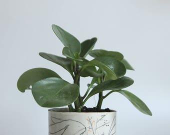 small succulent planter, plant pot, illustrated ceramics, woodland animals, ceramic hare vase, cylinder succulent pots, succulent gifts