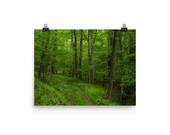 green forest print | nature photography | trees