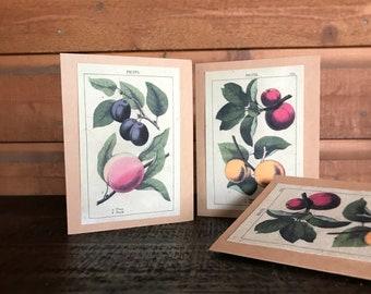 Seed Paper Cards / Set of 4 / Plantable / Vintage Designs
