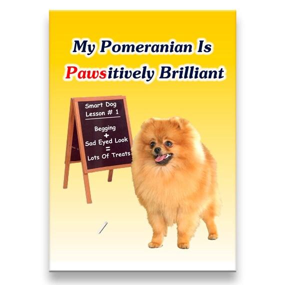 Pomeranian Pawsitively Brilliant Fridge Magnet