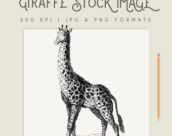 Vintage Giraffe image Instant Download Digital printable picture clipart graphic transfer high resolution logo