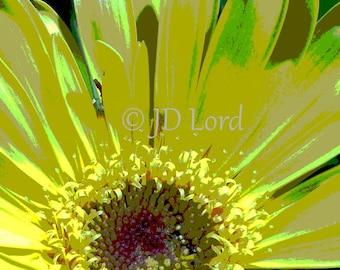 Abstract Gerbera Daisy, Yellow 5 x 7 Fine Art Photograph