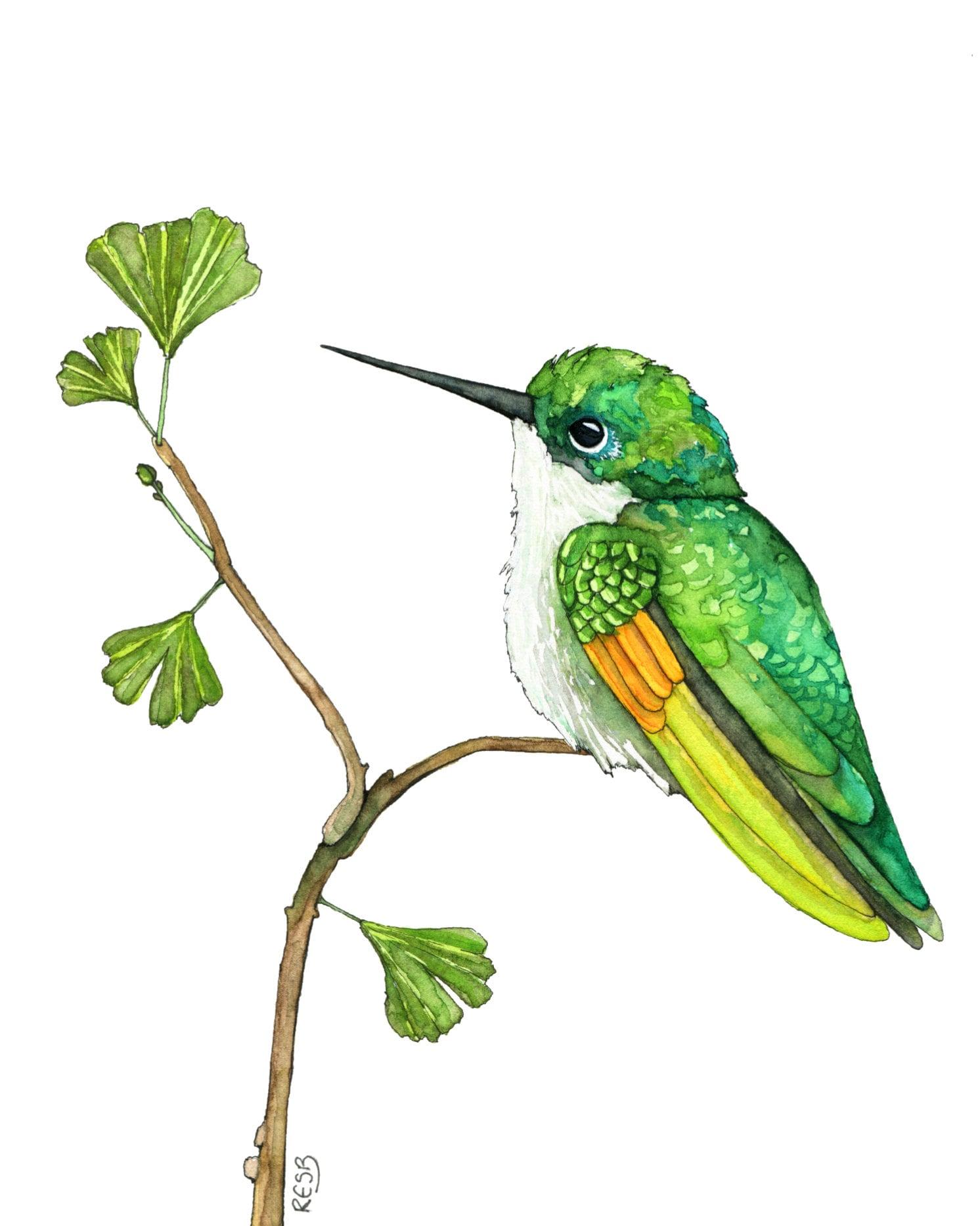 Hummingbird Painting Watercolor Painting Hummingbird Art