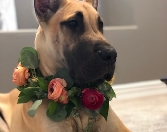 Fresh Flower Dog Collar