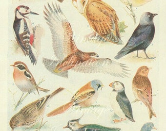 Vintage Antique 1930s Bird bookplate original lithograph art print illustration 2768
