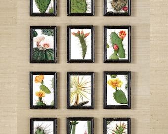Cactus Wall Art  Prints  Wall Art Digital  Modern Home Decor -Wall Art Vintage-  choose a SET of 6:) succulent desert wall art