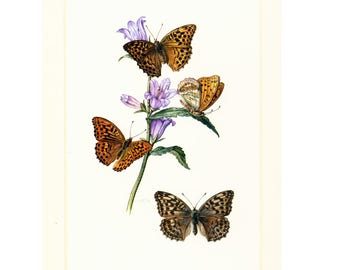 1960 Silver-washed fritillary Argynnis paphia Butterfly Print Vintage Illustration. Insect. Entomology.