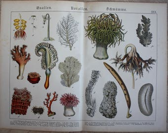 antique print coral sea 1886