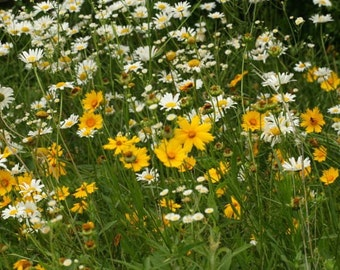 Wildflowers for Shade 1,000 Seeds 3.5 Grams