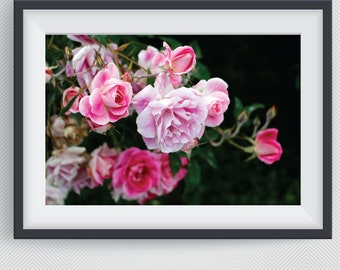 Roses On Black, Pink Roses, Flower Photography, Botanical Print, Printable Wall Art, Rose  Decor, Digital Download, Flowers  Nature