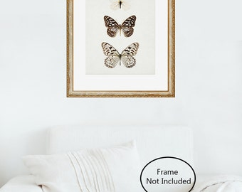 Butterfly Print, Nature Print, Wall Art Prints, Butterfly Art, Minimalist Art, Neutral Wall Decor, Modern Home Decor - Paper Kites