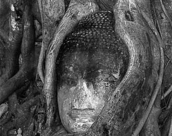 Buddha in a Tree:  Buddha photograph black and white Thailand Ayuddhaya travel wall decor