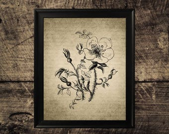 Vintage rose print, black white rose art, flower decor, vintage rose wall art, flower printable art