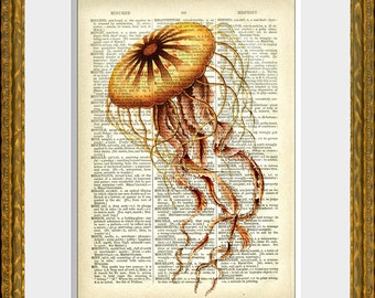 GRACEFUL JELLYFISH book page art print - an upcycled antique dictionary page with a retooled antique sea illustration - sealife home decor