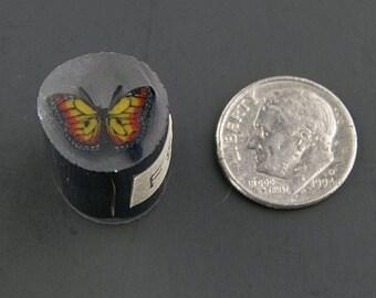 Monarch Murrine Boro Cane 8 grams - 116 F