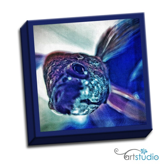 "Beta Fish - Blue Red Teal -  6""x6"" to 36""x36"" - 1.25"" Deep - Gallery Wrapped Canvas - artstudio54"