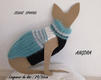 Young sphynx cat angora sweater
