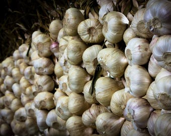 Garlic - Fine Art Print - Photograph - Wall Art - Kitchen Decor - Food Photography
