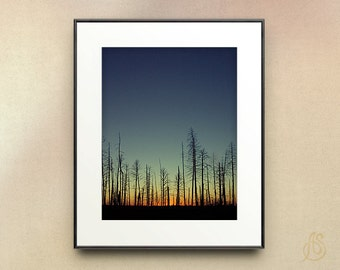 Grand Canyon Photography // Landscape Wall Decor // Kaibab National Forest // Grand Canyon National Park Arizona //  8x10 8x12 11x14