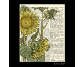 Sunflower - Vintage Dictionary Art Print - Gardening - Dictionary Page - Book Art Print No. P225