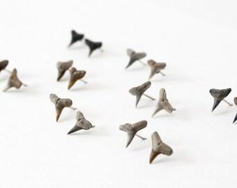 Shark Tooth Stud Earrings Gift For Shark Lover Shark Week Jewelry Handmade Jewelry Post Earrings Boho Earrings Nature Jewelry Beach Jewelry