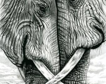 "Elephants Art, Drawing,  Giclée Art Print. Charcoal & Pencil. ""Do Not Disturb"""
