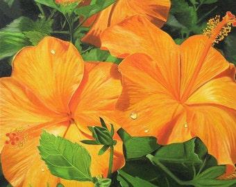 Orange Sun Hibiscus