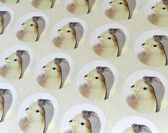 """Chicks in Hats Stickers Aviator Cap Chicken Stickers Seals 1.5"""" Round (12)"""