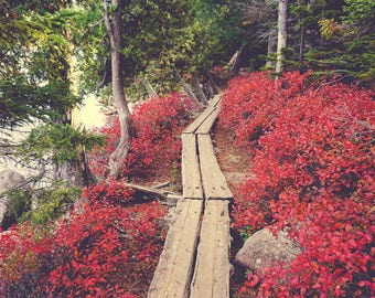 Nature Photography - Maine - Red Leaves - Fall Color - Autumn Wall Art - Home Decor - Boardwalk - Path - Hiking - Outdoor Adventure - Decor
