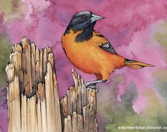 PRINT of Baltimore Oriole Watercolor Painting, Bird Painting, Bird Art Print, Wall Art, Home Decor, Wildlife, Nature, Songbird, Redbud, Pink