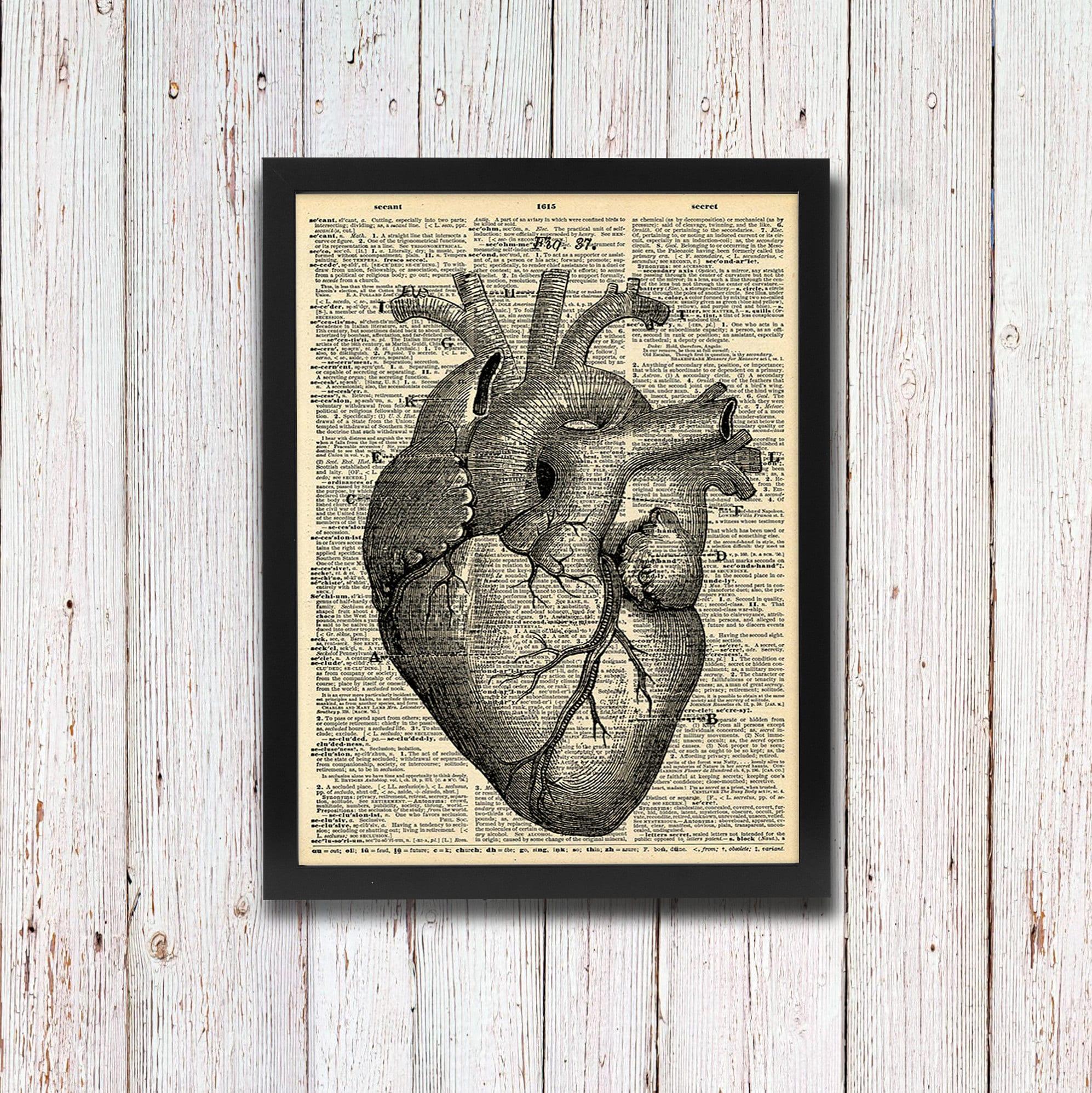 Charmant Herzanatomie Abbildungen Ideen - Menschliche Anatomie ...