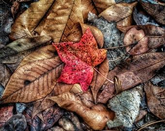 Autumn's Ground