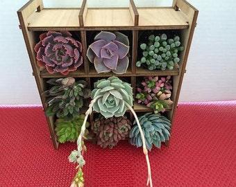 Succulent Plant Nine Plant Shadow Box Complete Kit